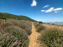 Το έδαφος lavender στο χωριό Kuyucak στην Τουρκία στοκ εικόνα με δικαίωμα ελεύθερης χρήσης