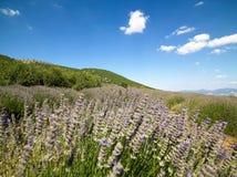 Το έδαφος lavender στο χωριό Kuyucak στην Τουρκία στοκ εικόνα