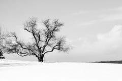 Το ένα δέντρο Στοκ Εικόνες