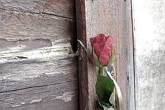 Το ένα αυξήθηκε λουλούδι με τη σκιά παρεμβάλλεται στο πνεύμα λαβών ορείχαλκου πορτών Στοκ φωτογραφίες με δικαίωμα ελεύθερης χρήσης