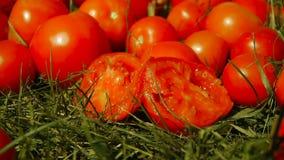 Το ένα - μισός - έκοψε την ντομάτα βρίσκεται στην πράσινη χλόη δίπλα σε άλλες ντομάτες απόθεμα βίντεο