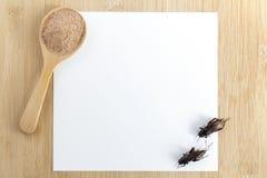 Το έντομο σκονών γρύλων για την κατανάλωση και το μαγείρεμα των τροφίμων στο ξύλινο κουτάλι με το πρότυπο της Λευκής Βίβλου στο ξ στοκ εικόνα
