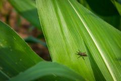 Το έντομο στο πράσινο φύλλο, κλείνει επάνω Στοκ Εικόνες