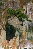 Το δέντρο αυξάνεται σε έναν όμορφο πολύχρωμο βράχο Στοκ Εικόνα