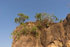 Το δέντρο αυξάνεται στον απότομο βράχο Στοκ Φωτογραφίες