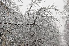 Το δέντρο είναι ένα δέντρο της Apple που καλύπτεται με το χιόνι Στοκ φωτογραφία με δικαίωμα ελεύθερης χρήσης