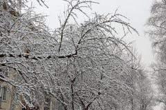Το δέντρο είναι ένα δέντρο της Apple που καλύπτεται με το χιόνι Στοκ εικόνες με δικαίωμα ελεύθερης χρήσης