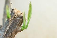 Το δέντρο είναι νέο - γεννημένος στοκ εικόνες με δικαίωμα ελεύθερης χρήσης
