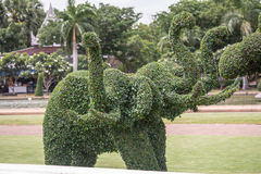Το δέντρο είναι στο πάρκο Ταϊλάνδη Phuthamonthon Στοκ Φωτογραφίες
