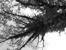 Το δέντρο διακλαδίζεται άποψη από κάτω από Στοκ Εικόνα
