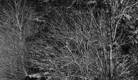 Το δέντρο διακλαδίζεται σύγχυση στοκ εικόνες