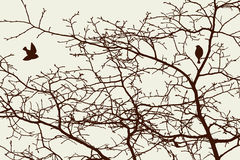 Το δέντρο διακλαδίζεται την άνοιξη Στοκ Εικόνες