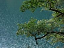 Το δέντρο και η λίμνη Στοκ φωτογραφία με δικαίωμα ελεύθερης χρήσης