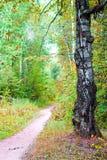 Το δέντρο και η πορεία Στοκ εικόνες με δικαίωμα ελεύθερης χρήσης