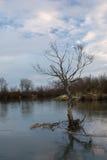 Το δέντρο και ο ποταμός Στοκ φωτογραφία με δικαίωμα ελεύθερης χρήσης
