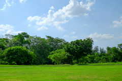 Το δέντρο και ο χορτοτάπητας μια φωτεινή θερινή ημέρα σταθμεύουν δημόσια στοκ εικόνα