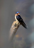 Το δέντρο καταπίνει το πουλί Στοκ εικόνες με δικαίωμα ελεύθερης χρήσης