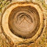 Το δέντρο με από τον κλάδο Στοκ Φωτογραφίες
