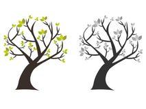 Το δέντρο με πράσινο βγάζει φύλλα Στοκ Εικόνες