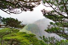 Το δέντρο με τα βουνά και ομίχλη στο υπόβαθρο Huangshan, Anhui, Κίνα Στοκ Φωτογραφία