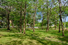 Το δέντρο με τη σκιά σταθμεύει δημόσια στοκ εικόνα