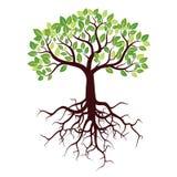 Το δέντρο με τις ρίζες και βγάζει φύλλα ελεύθερη απεικόνιση δικαιώματος