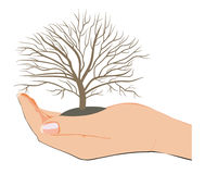το δέντρο μου Στοκ φωτογραφία με δικαίωμα ελεύθερης χρήσης