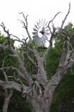Το δέντρο ο ανεμόμυλος Στοκ φωτογραφίες με δικαίωμα ελεύθερης χρήσης