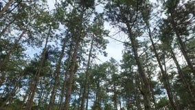 Το δέντρο ολοκληρώνει το υπόβαθρο απόθεμα βίντεο