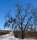 Το δέντρο παπουτσιών Στοκ Εικόνες