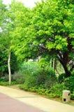 Το δέντρο παραλιών Στοκ Φωτογραφίες
