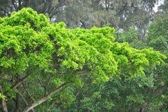 Το δέντρο παραλιών Στοκ φωτογραφία με δικαίωμα ελεύθερης χρήσης