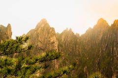 Το δέντρο πεύκων με τα βουνά στο ηλιοβασίλεμα Huangshan, Anhui, Κίνα Στοκ Φωτογραφίες