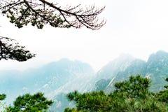 Το δέντρο πεύκων με τα βουνά του κίτρινου βουνού Huangshan, Anhui, Κίνα Στοκ Εικόνα