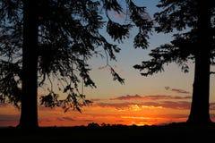 Το δέντρο πεύκων σκιαγραφεί το ηλιοβασίλεμα πλαισίων Στοκ φωτογραφία με δικαίωμα ελεύθερης χρήσης