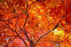 Το δέντρο πτώσης βγάζει φύλλα το υπόβαθρο Στοκ εικόνα με δικαίωμα ελεύθερης χρήσης