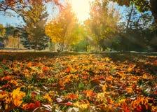 Το δέντρο πτώσης βγάζει φύλλα το υπόβαθρο Στοκ Εικόνες