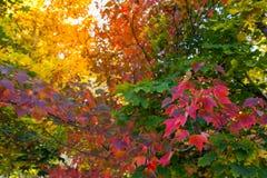 Το δέντρο πτώσης βγάζει φύλλα το υπόβαθρο Στοκ εικόνες με δικαίωμα ελεύθερης χρήσης