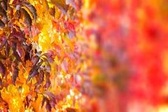 Το δέντρο πτώσης βγάζει φύλλα το υπόβαθρο Στοκ Εικόνα