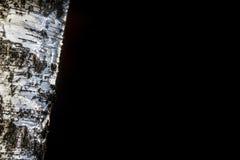 Το δέντρο σημύδων με το Μαύρο απομονώνει, αντιγράφει το διάστημα στοκ φωτογραφία με δικαίωμα ελεύθερης χρήσης