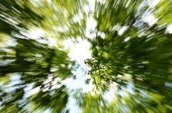 Το δέντρο στέφει την κεκλεισμένων των θυρών κίνηση Στοκ φωτογραφίες με δικαίωμα ελεύθερης χρήσης