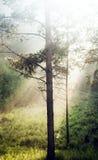 Το δέντρο στο δάσος Στοκ φωτογραφία με δικαίωμα ελεύθερης χρήσης