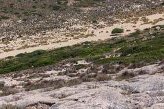 Το δέντρο στο νησί στοκ εικόνες με δικαίωμα ελεύθερης χρήσης