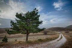 Το δέντρο στο δρόμο στοκ φωτογραφία