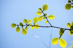 Το δέντρο της Apple ανθίζει την άνοιξη Στοκ φωτογραφίες με δικαίωμα ελεύθερης χρήσης