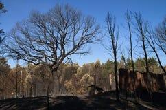 Το δέντρο φελλού, τα δέντρα πεύκων και ένα παλαιό υπόστεγο έκαψαν στο έδαφος - Pedrogao Grande Στοκ Φωτογραφίες