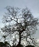 Το δέντρο Στοκ εικόνα με δικαίωμα ελεύθερης χρήσης