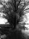 Το δέντρο Στοκ Φωτογραφία