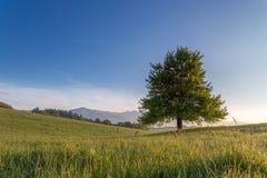 Το δέντρο Στοκ εικόνες με δικαίωμα ελεύθερης χρήσης