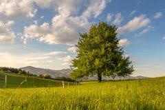 Το δέντρο Στοκ Εικόνα